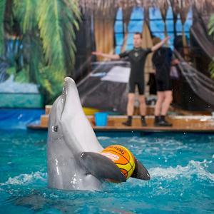Дельфинарии, океанариумы Березового