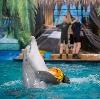 Дельфинарии, океанариумы в Березовом
