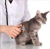 Ветеринарные клиники в Березовом